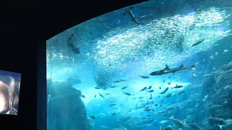 水族館ビジネスモデルの再設計スタジオ